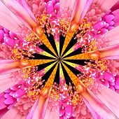stock photo of symmetrical  - Pink Flower Center Symmetric Collage Made of Collection of Various Wildflowers - JPG
