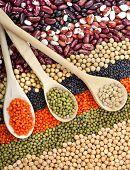picture of legume  - lentils - JPG