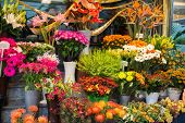 foto of flower shop  - Street flower shop with colourful flowers - JPG