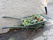 pic of wheelbarrow  - work in a garden wheelbarrow ready for use - JPG