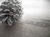 pic of rest-in-peace  - Pine Cone - JPG