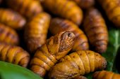 stock photo of cocoon  - Yellow silkworm cocoon shell through the Silk Route the brewing process bringing silks to silk - JPG