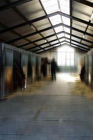 picture of feeding horse  - The feeding of horses in a horse stable - JPG