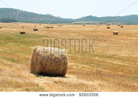 Hay bales in the countryside from Portugal