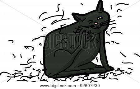 Messy Cat Shedding Hair