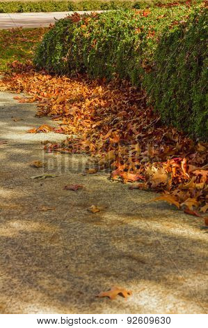Fall leaves on sidewalk