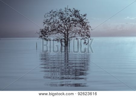 Sunset with silhouetted tree and reflection in water