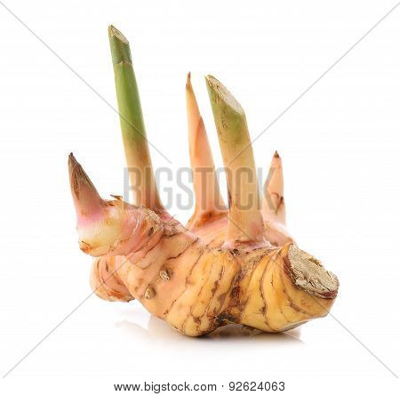 Fresh Galangal On Over White Background