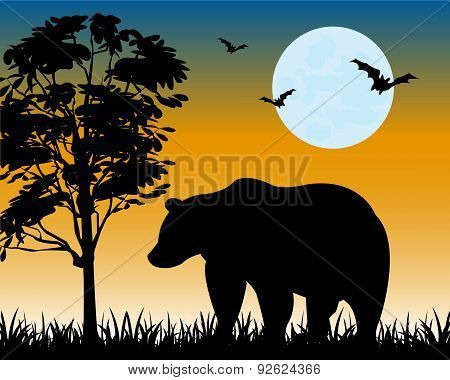 Silhouette Bear On Glade
