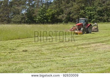 Summer day, red tractor mows the lawn for animal feed on the farm.