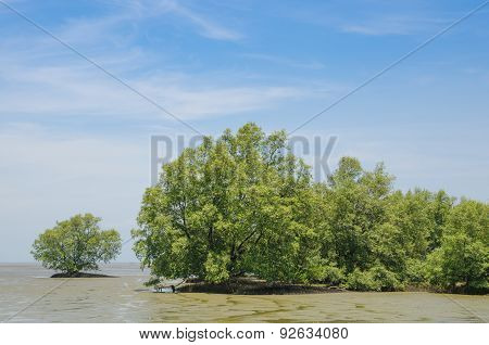 Solitary Mangrove Shrub In Salt Water