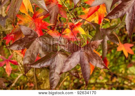Elm leaves at fall