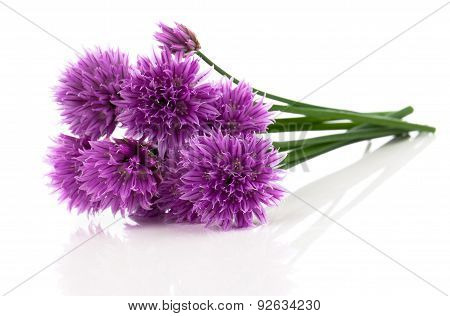 Purple Allium Onion Flower
