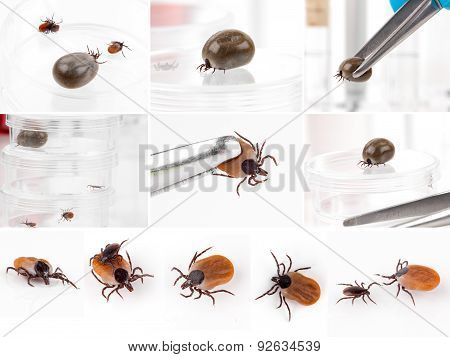 Set Of Ticks