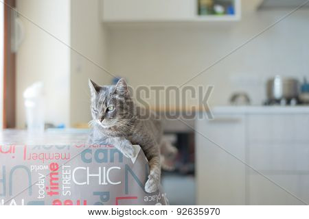 Domestic Cat Lying On Indoor Table
