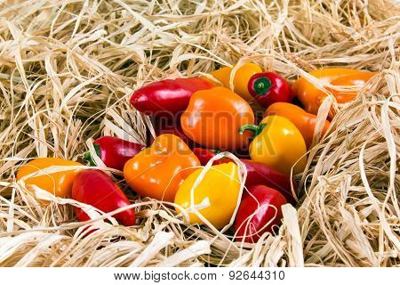 Fresh Colorful Mini bell peppers on straw.