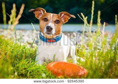 Frisbee Dog