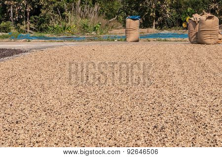 Dried Robusta Coffee Seeds Produced In Thailand