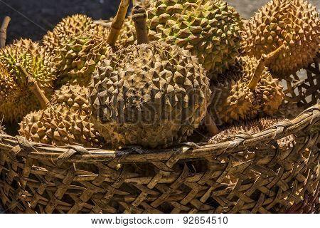 Philippines Durian