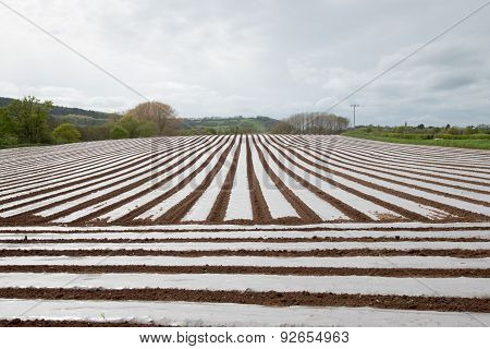 Rows Of Polytunnels