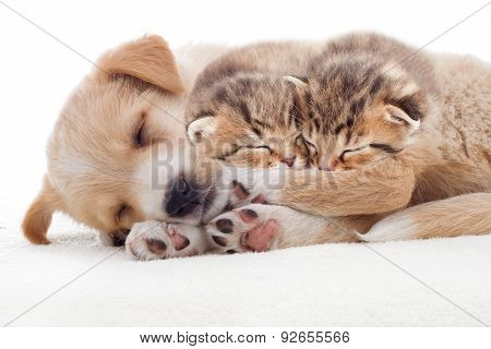 Puppy And Kittens Sleeps