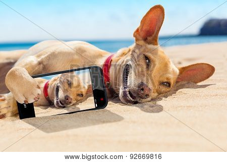 Selfie Summer Dog