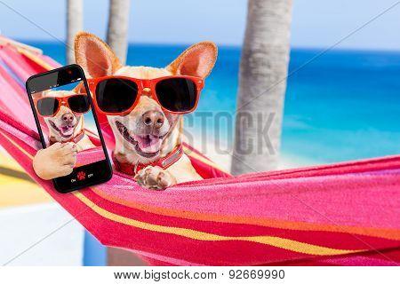 Dog Selfie Hammock
