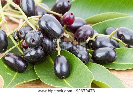 Jambolan Plum Or Java Plum 'syzygium Cumini (l) Skeels.'