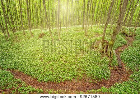 Forest at early sunset time.