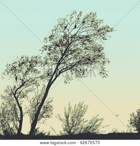 Vector silhouette of trees and birds