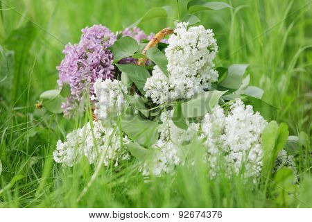 white and purple lilac flowers in basket on grass