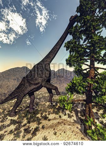 Brachiosaurus dinosaur eating wollomia pine - 3D render