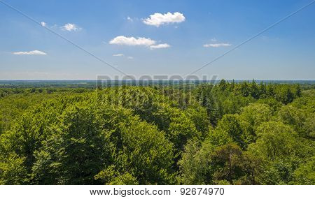 Aerial view of a beech forest in sunlight in spring