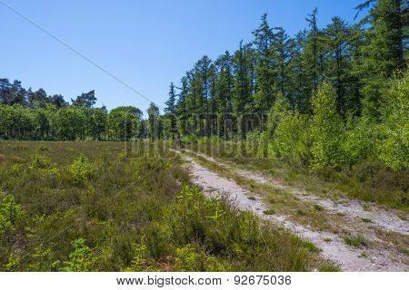 Bridle way through a forest in sunlight in spring