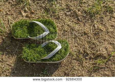 global warming environment, last green flip flops isolated on dried grass