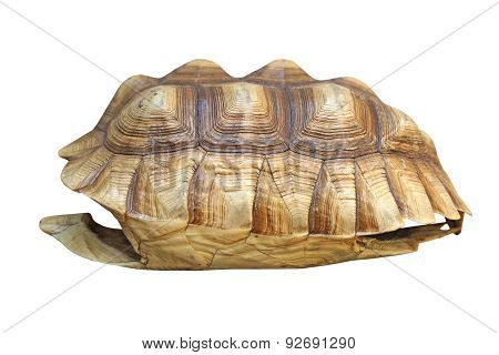 African Spurred Tortoise Or Geochelone Sulcata Shell