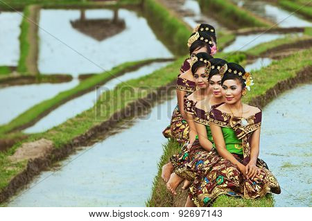 Balinese Girls In Rice Terraces