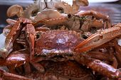 foto of crab  - Boiled Crabs, Ready to cook for Thai Crab Curry