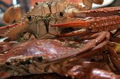 stock photo of crab  - Boiled Crabs - JPG