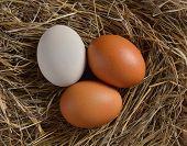 pic of bird egg  - Close up of egg in bird nest - JPG