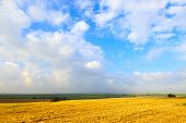 stock photo of fall-wheat  - Wide sunlit field harvest wheat with a blue sky and clouds - JPG