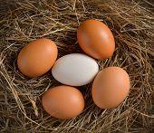 picture of bird egg  - Close up of egg in bird nest - JPG