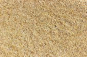 pic of sorghum  - closeup of Sorghum seeds or white millet or whole jowar kernels background - JPG