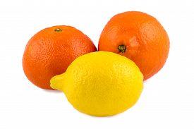 picture of tangelo  - Photo of tangerine - JPG