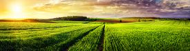 pic of track field  - Vast rural landscape sunset panorama with a field or meadow and tracks leading to the horizon and the colorful clouds - JPG