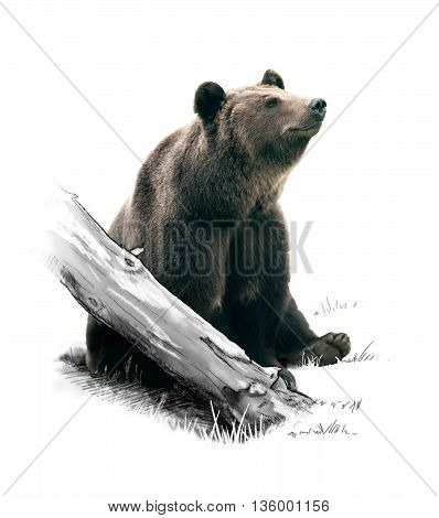 A brown bear in the forest. Brown Bear.