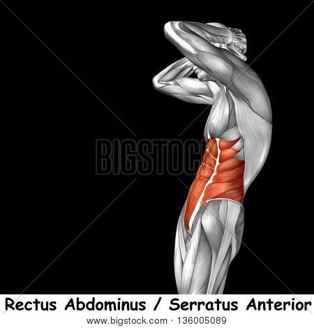 Concept or conceptual 3D illustration chest human anatomy or anatomical and muscle isolated on black background