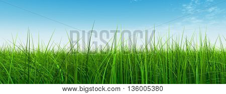 3D illustration of a conceptual green, fresh and natural grass field or lawn, blue sky background in spring or summer banner