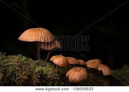 Mushroom family in Da Lat's rainforest - Bidoup nui ba national park