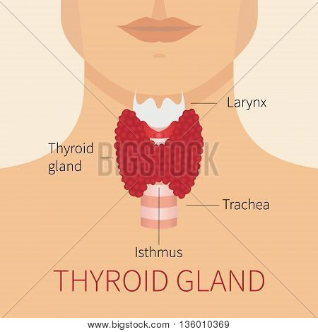 Thyroid gland vector illustration. Thyroid gland and trachea scheme shown on a silhouette of a man. Thyroid diagram sign. Human body organs thyroid anatomy icon. Medical concept. Anatomy of people.